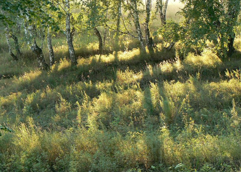 Ключ-Камышенское плато в Новосибирске